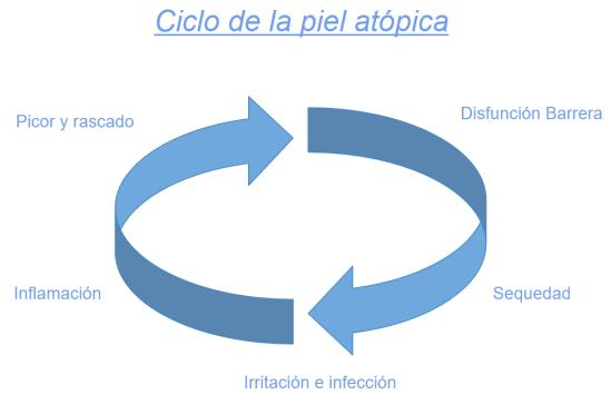 ciclo-piel